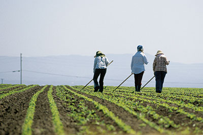 Agricultural workers in the field photo.