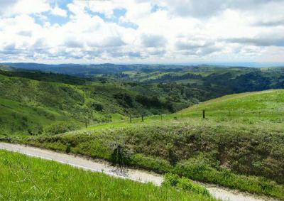 SF Bay Area, Skyline Blvd lush greenery