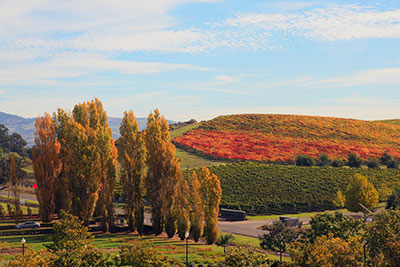 Fall in Napa Valley