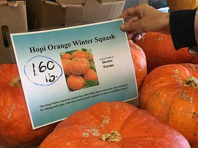 Hopi Orange Squash