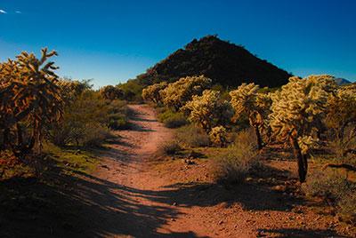 AZ landscape