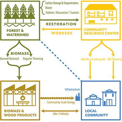 Biomass diagram