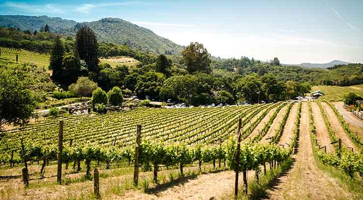 Napa - Sonoma wine vineyards